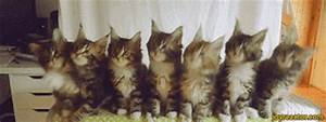 Funny Cat Dancing GIFs - Find & Share on GIPHY