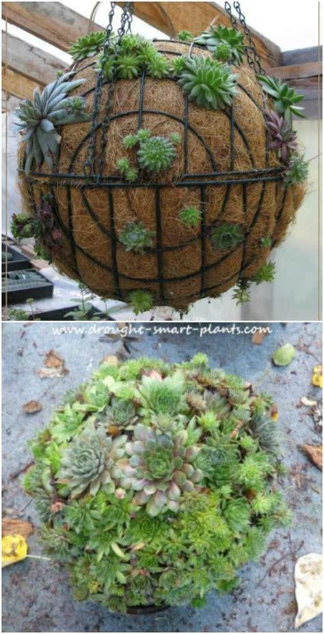 easy diy backyard succulent garden ideas style motivation