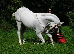 Au Cheval Blanc : photos cheval blanc photos cheval galerie photo de chevaux blancsphotos cheval ~ Markanthonyermac.com Haus und Dekorationen