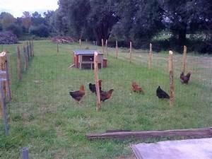 Comment Elever Des Poules : pdf sur l levage de poules petite chelle verslautonomie ~ Melissatoandfro.com Idées de Décoration