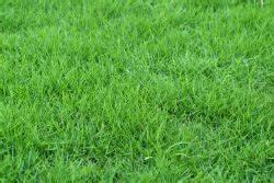Rasen Vertikutieren Wie Oft : mit einem gepflegten rasen wird jeder nachbar neidisch ratgeber ~ Markanthonyermac.com Haus und Dekorationen