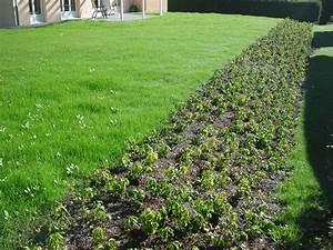 Böschung Bepflanzen Fotos : rasen ~ Orissabook.com Haus und Dekorationen