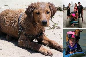 Meet the surfing therapy dog named Ricochet