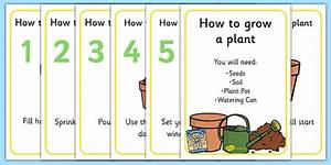 How To Grow A Plant Display Posters  Teacher Made