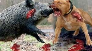 When Animal Prey Fights Back - Mongoose Vs Cobra - Best ...