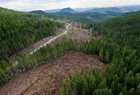 Canadian Boreal Forests 2015