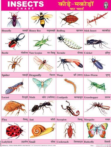 insects  images english worksheets  kids hindi