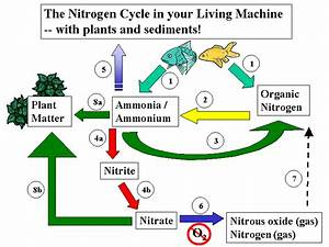 Lesson 1 Nitrogen Cycling