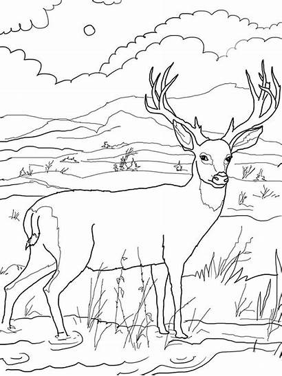 Deer Coloring Template Animal Templates