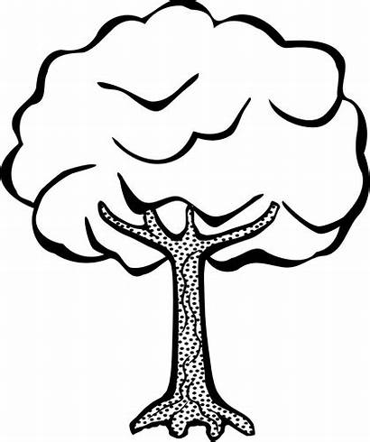 Tree Clipart Drawing Clip Draw Colouring Pohon