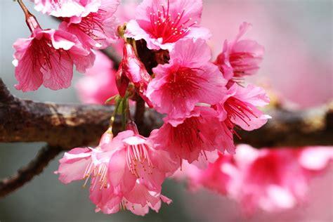 เที่ยวสวนดอกไม้ : 15 สวนดอกไม้สวยในเมืองไทย สถานที่ท่อง ...