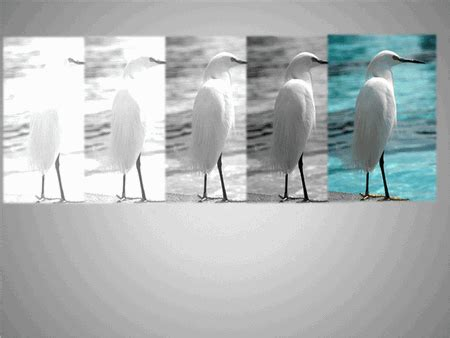 animated pictures fly   gray  full color template