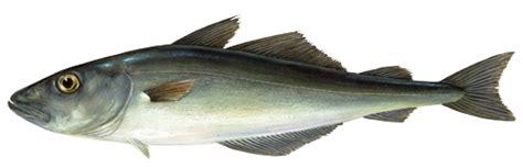 clipart cuisine lieu noir marine stewardship council