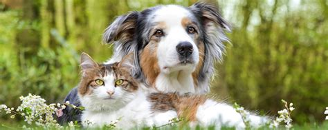 naturally pawesome pet care