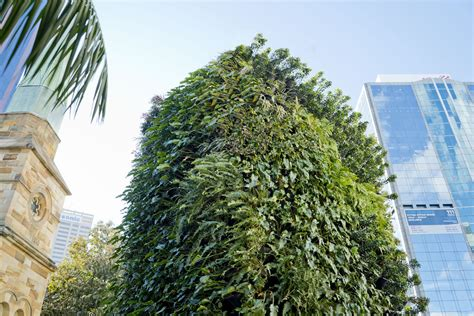 Greenwood Gets A Vertical Garden Green Wall-atlantis Aurora