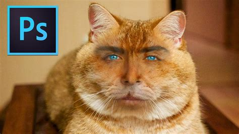 Photoshop Tutorial Cat With Human Face Photoshop