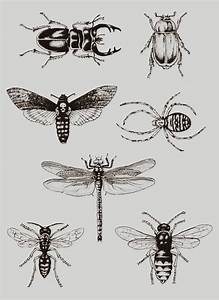 Collection of 25+ Cool Insect Tattoo Design