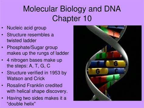 ppt molecular biology and dna chapter 10 powerpoint