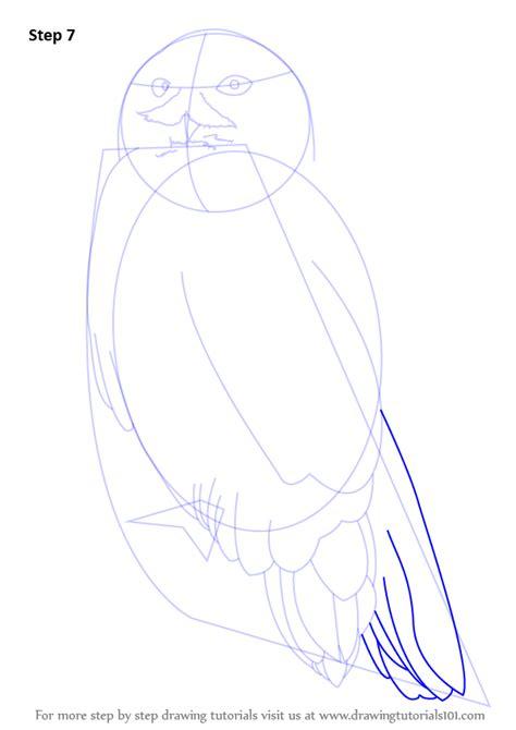 learn   draw  snowy owl birds step  step