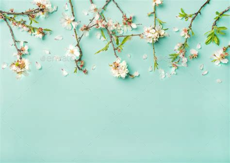 Spring almond blossom flowers over light blue background ...