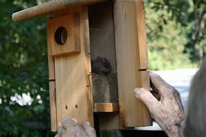 Squirrel House Plans Free Plans DIY Free Download plywood