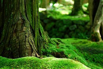 Nature Forest Moss Trees Bokeh Field Desktop