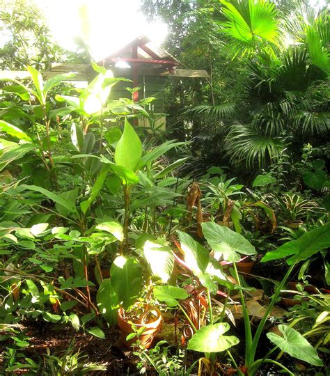 tropical backyard pictures tropical texana garden book review the tropical garden by william warren