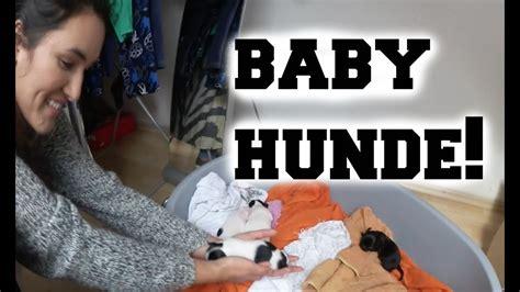baby hunde ankat youtube