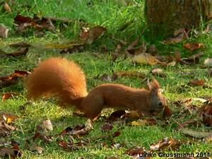 Tiere Im Garten Begraben : tiere naturschutz im garten ~ Lizthompson.info Haus und Dekorationen