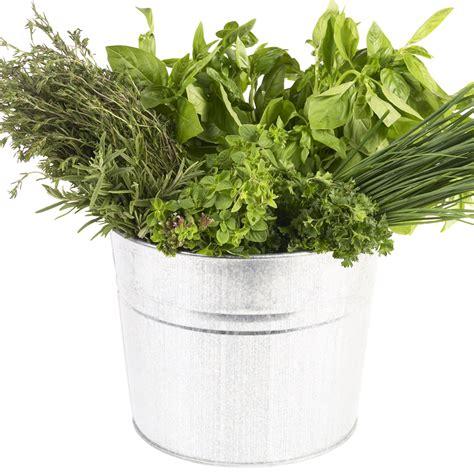 cuisiner chou frisé comment cuisiner les herbes aromatiques cuisine