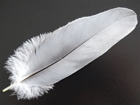 New Research Show Bird Feathers Are Similar To Carbon Fibre