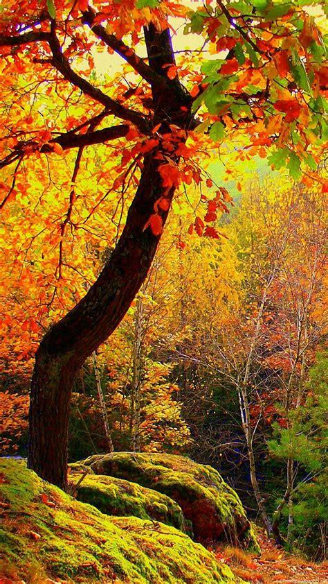 Iphone 6 Autumn Wallpaper (87+ Images