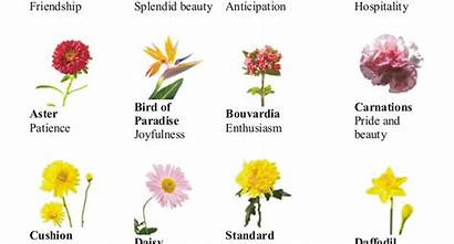 Flowers Types Different Flower