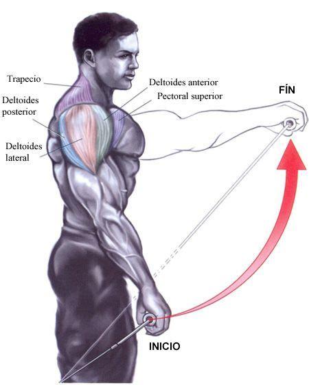 polea baja frontal ombro hombros ejercicios frontales treinamento lateral adelante quieres cuerpo bulevip ejercicio elevaciones triaxial vias latero eixo elevacion