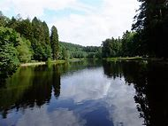Pike Forest of Dean Mallards