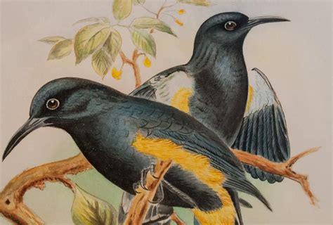 extinct animals scientists   revive
