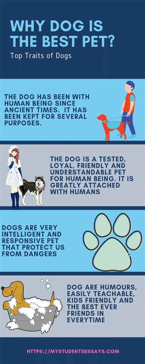 pet dog essay bi coaorg