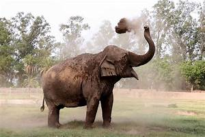 Elephant Tramples Family To Death During Rampage