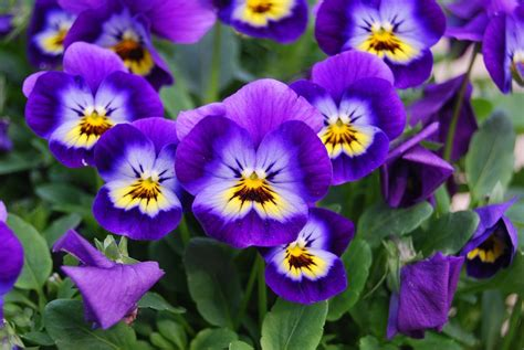 laundry in kitchen ideas how to grow violas in a home garden