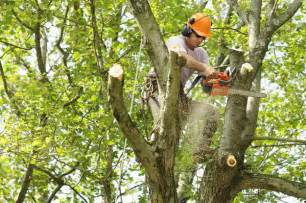houston tree trimming and cutting services lanzas tree service