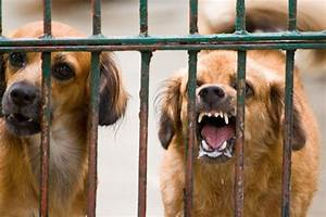 Your Dog's Health: Is Rabies Really 100% Fatal? - UrDogs