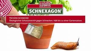 Mittel Gegen Schnecken : schnexagon das kologische mittel gegen schnecken youtube ~ One.caynefoto.club Haus und Dekorationen