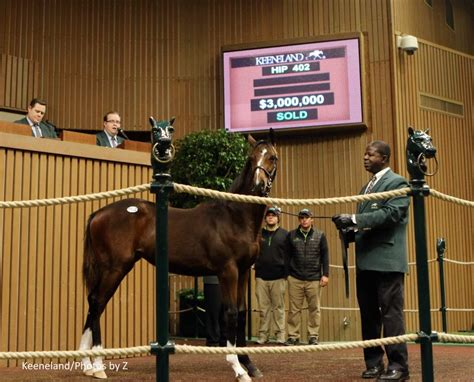 keeneland million auction thoroughbred sales north horse november weanling hip record american tapit sets priced highest holder
