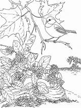 Coloring Pages Chickadee Birds Printable Coloringhit 1000 Recommended sketch template