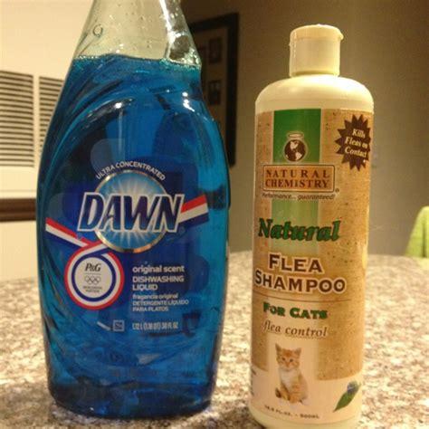 dog flea remedies ideas  pinterest natural