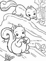 Squirrel Coloring Colouring Tree Colornimbus Tiere Animals Realistic Malvorlagen Drawings Ausmalbilder Adult Drawing sketch template