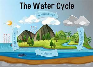 Show The Diagram Of Water Cycle