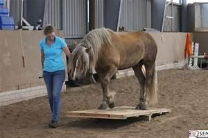 Podest Pferd Selber Bauen : horse agility reitenbeiannes webseite ~ Yasmunasinghe.com Haus und Dekorationen