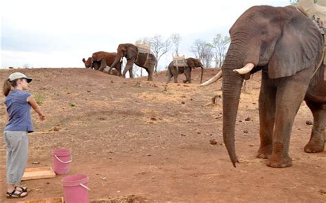 how can an elephant get some elephants get the point science news