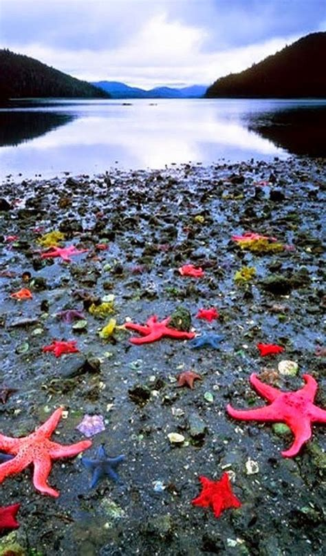 The Westin Resort And Villas St John Usvi Source Starfish